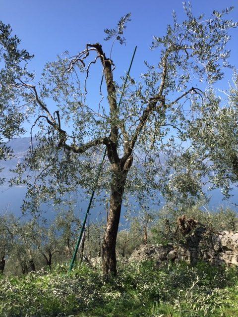 der letzte Baum 2019