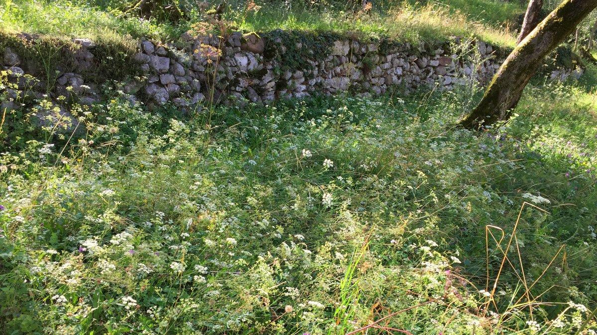 Wiese im Olivenhain IMG_5229